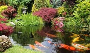 zahradní jezírko rybky