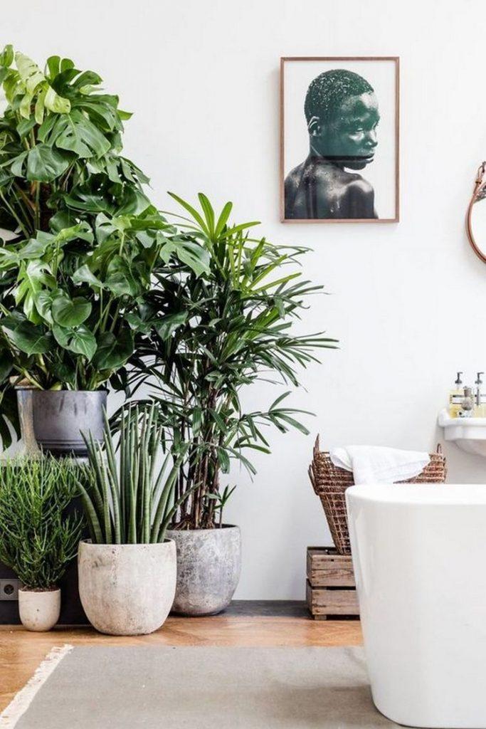 rostliny v interiéru - tělo 2
