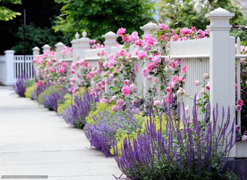 Jak oživit zahradu s koncem léta?