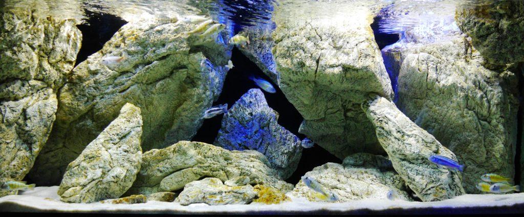 Jak proměnit vaše akvárium ve skutečnou mořskou hlubinu? Pomůže kvalitní pozadí do akvária