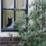 Stará okna lze vyměnit i v zimě