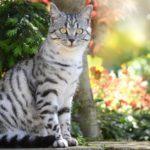 Zútulněte byt pokojovkami, které potěší i vaši kočku