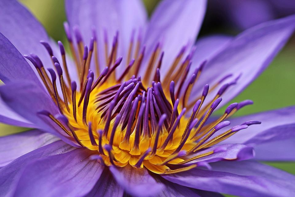 Zkrášlete si zahradu krásným zahradním jezírkem