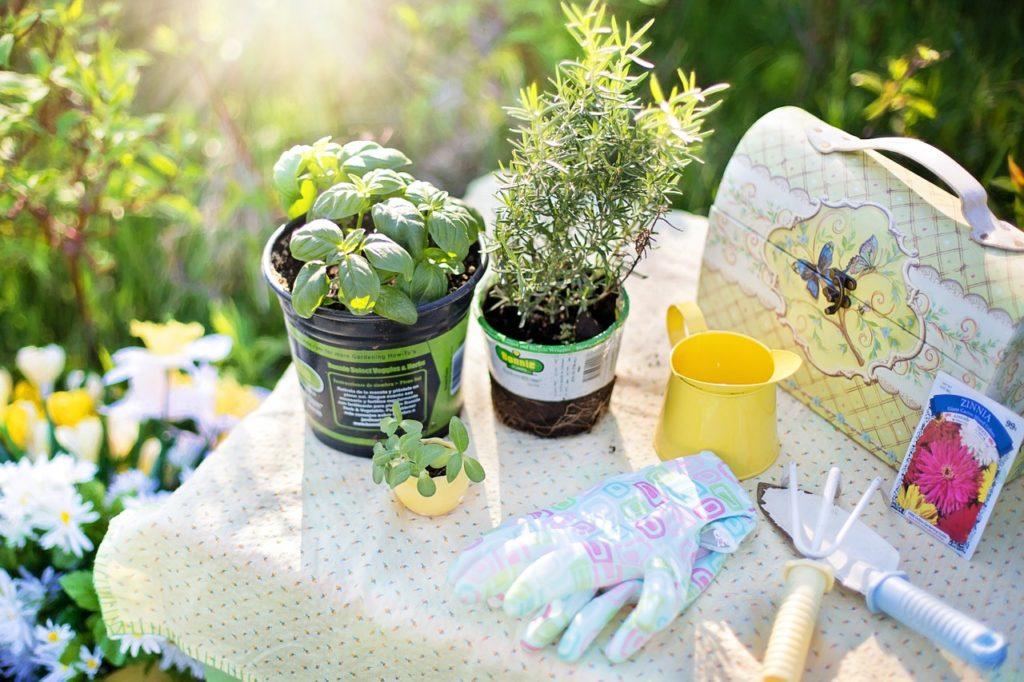 Provoňte si byt bylinkami