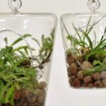 Aerárium – mikrosvět ve skle