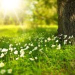 Půjčovna zahradních strojů oživila naši zahradu