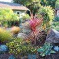 Je vaše zahrada nudná? Přetvořte ji do středozemního stylu